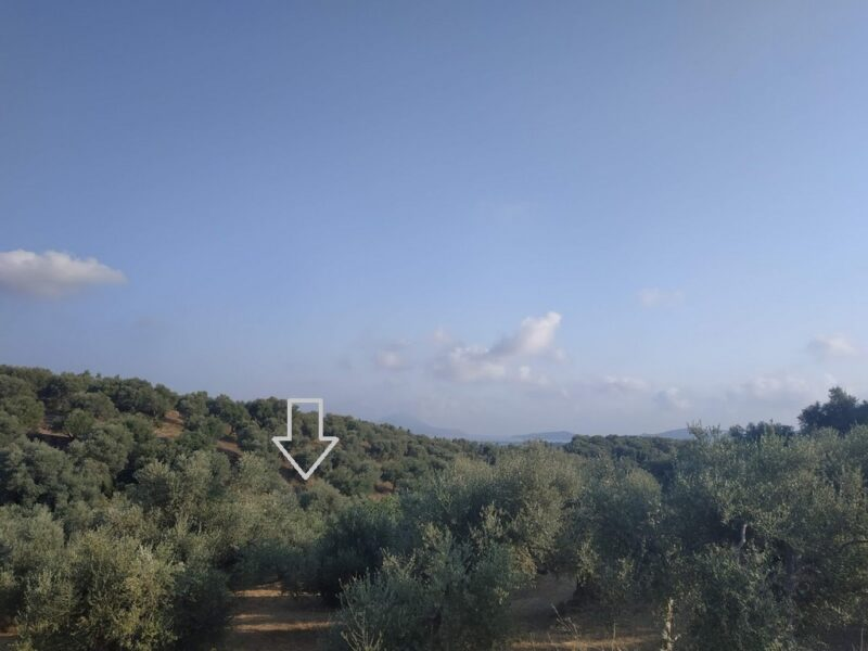 Olive grove for sale in Korifasio
