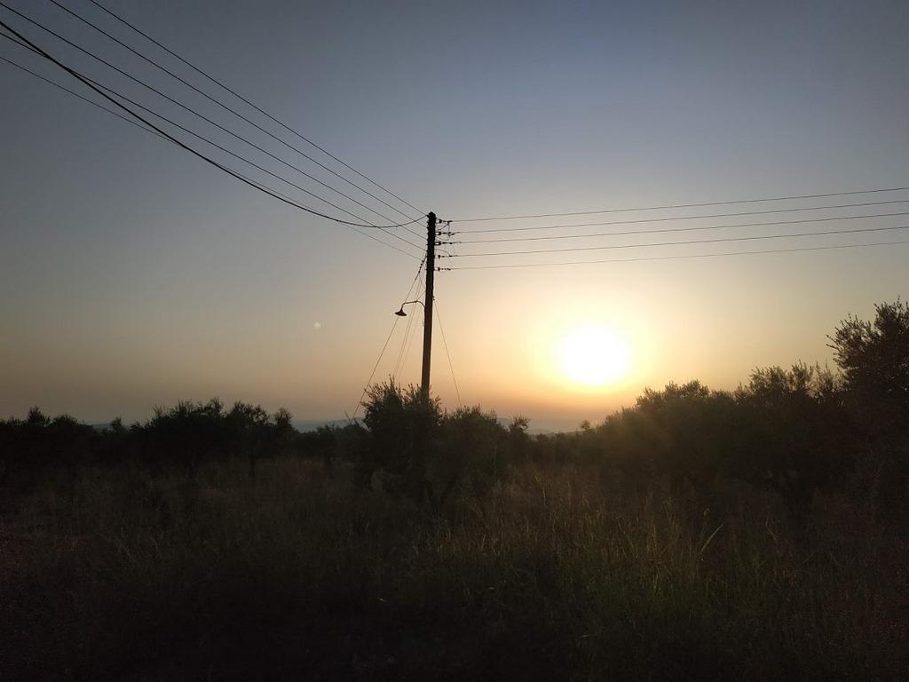 Πωλείται ελαιοπερίβολο 5900 τμ στο χωριό Σχινόλακα