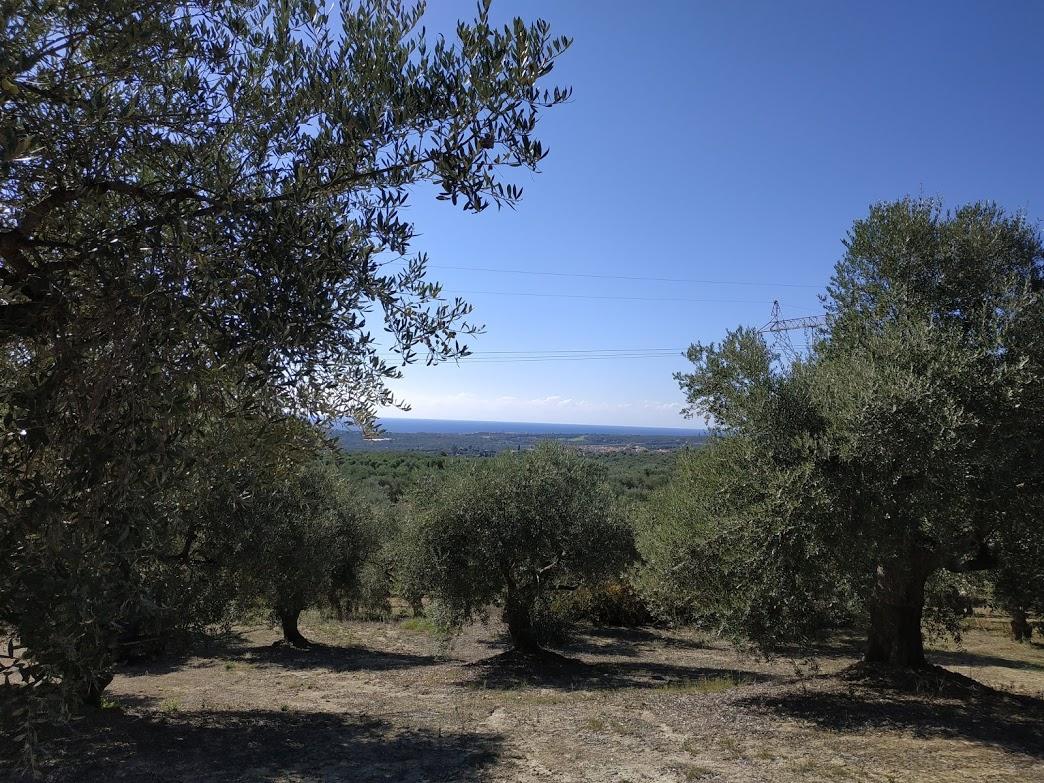 Oliveland for sale in Koryfasio Messinia Peloponnes