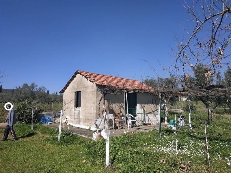 Olivenhain 17000 m2 zum kaufen in Chatzi Messenien Peloponnes